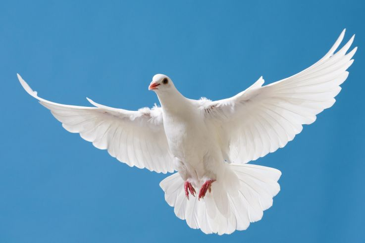 White dove with outstretched wings on blue sky