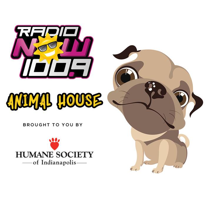 Animal House Generic