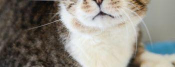 Amigo The Cat