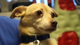 Buster's Dog House - Cheech