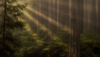 Rays and Redwoods.