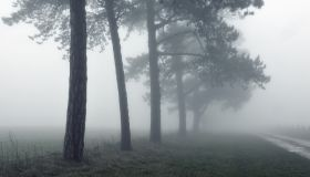 A moody eerie path in the countryside next to a line of trees on a cold spooky, foggy day.